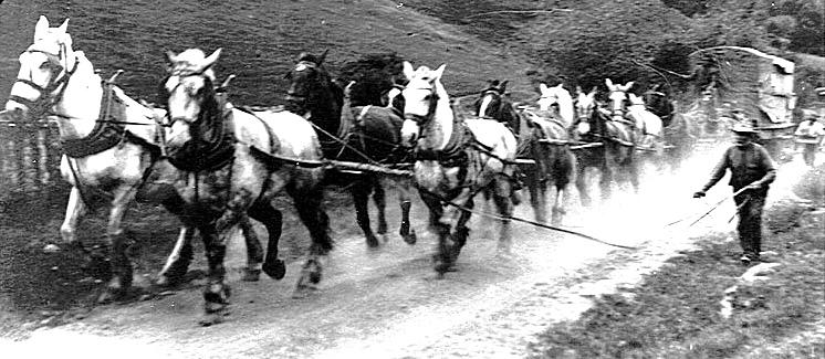 horseteam